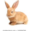 bunny / rabbit - Uncategorized -