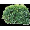 bush - Plants -