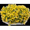 bush - Rastline -