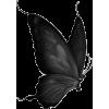 butterflies - Životinje -