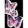 butterflies purple - Animals -