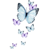 butterflies purple blue - Animals -