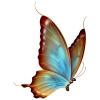 butterfly5 - Uncategorized -