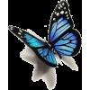 butterfly - 動物 -