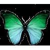 butterfly - Živali -