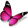 butterfly - Animales -