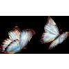 butterfly - Animais -