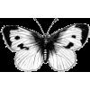 butterfly - Predmeti -
