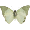 butterfly - Natural -