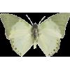 butterfly - Natureza -