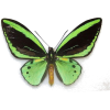 butterfly - Natura -