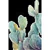 cactus - Plants -
