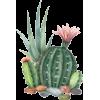 cactus - Illustrations -