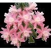 cactus - Plantas -