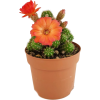 cactus - Растения -