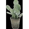 cactus - Biljke -