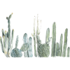 cactus water colour - 植物 -