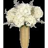 calyx - Plants -