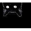 cat - Animais -