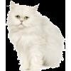 cat - Živali -
