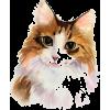 cat - 動物 -