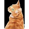 cat - Animali -