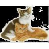 cat - Animales -