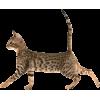 cat - Items -