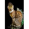 cat- misted - Animals -