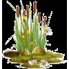 cattails - Rośliny -