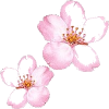 cherry blossoms - Items -