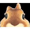 chipmunk - Uncategorized -