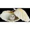 clam - Nature -