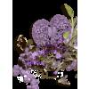 cluster - Plantas -