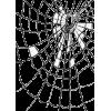 cobweb - Animals -
