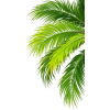 coconut,trees - Plantas -
