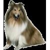 collie - Animals -