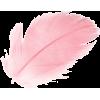 coral-pink-feather-on-white-background_3 - Predmeti -
