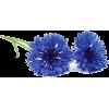 cornflower flowers - Plantas -