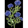 cornflowers - Plants -