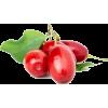 cranberry - Owoce -