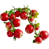 cranberry - Fruit -