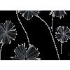 cvet - Plants -