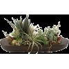 Cvijece Green - Plants -