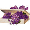 Cvijet Plants Purple - Piante -