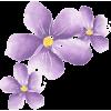 Cvijet Plants Purple - 植物 -