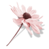 Cvijet Plants Pink - Plants -