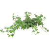 Cvijet Plants Green - Plantas -
