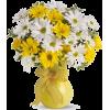 daisy Flowers - Plantas -