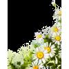 daisy corner - Plants -